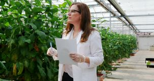 Wetenschapper die aubergine in serre 4k onderzoeken stock footage