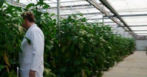 Wetenschapper die aubergine in serre 4k onderzoeken stock video
