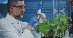Wetenschapper die met een groene installatie experimenteren stock videobeelden