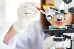 Wetenschapper het dalen vloeistof aan petrischaal royalty-vrije stock afbeeldingen