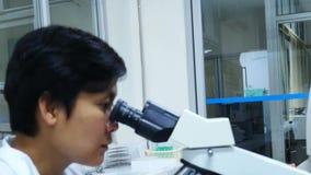 Wetenschapper Working In Laboratory stock videobeelden
