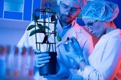 Wetenschappers bij botanisch laboratorium stock afbeeldingen