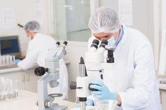 Wetenschappers die aandachtig met microscopen werken stock foto's