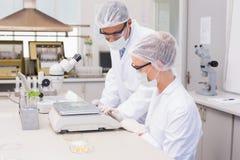 Wetenschappers die graan in petrischaal wegen stock fotografie