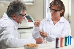 Wetenschappers die technische en chemische analyse van graan en soja maken royalty-vrije stock afbeelding