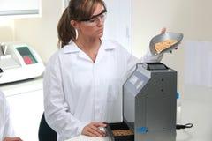 Wetenschappers die technische en chemische analyse van graan en soja maken stock afbeeldingen