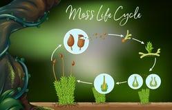 Wetenschapsvector van Moss Life Cycle stock illustratie