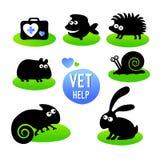 Weterynaryjna klinika Zwierzę domowe weterynarza pomoc Zdjęcie Stock
