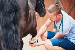 Weterynaryjna medycyna przy gospodarstwem rolnym Zdjęcia Stock