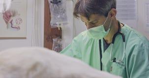 Weterynaryjna operacja - weterynarz działa białego psa w zwierzę domowe klinice zbiory wideo