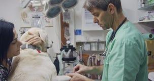 Weterynaryjna operacja - weterynarz sprawdza białego psa w zwierzę domowe klinice zbiory wideo