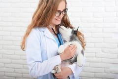 Weterynarz egzamininuje małego łuskowatego szczeniaka obraz stock