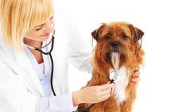 Weterynarz egzamininuje psa obrazy stock