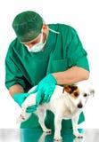 Weterynarz egzamininuje psa biodro obrazy stock