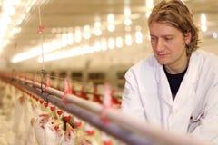 Weterynarz i kurczak Obraz Stock
