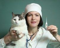 Weterynarz kobieta egzamininuje siberian kota Zdjęcie Stock