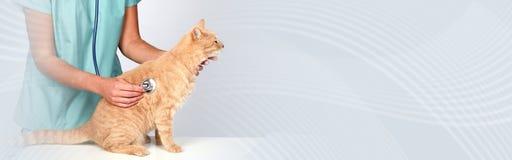 Weterynarz lekarka z kotem w weterynaryjnej klinice obrazy royalty free