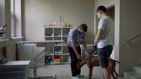 Weterynarz muska psa w weterynaryjnej klinice zbiory