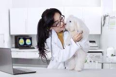 Weterynarz sprawdza maltese psa czystość Obrazy Royalty Free