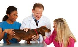 Weterynarz: Właścicieli zwierząt domowych pies przy weterynarza biurem Obraz Stock
