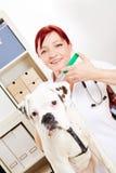 Weterynarz z psem i strzykawką Obraz Royalty Free