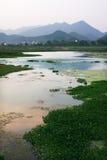 Wetland. The wetland near the city Stock Photo