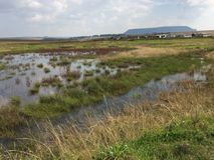 wetland fotografia stock