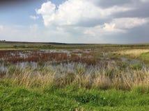 wetland fotografia stock libera da diritti