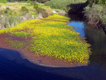 Wetland. A corner of a picturesque wetland Royalty Free Stock Photos