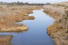 Wetland. A slow moving creek meanders through a wetland in Palo Alto, California Royalty Free Stock Image