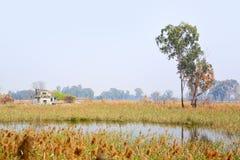 Wetland. Landscape photoed in Hong Kong, Nam San Wai Royalty Free Stock Images