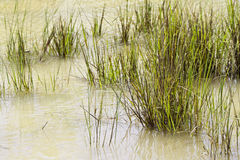 Wetland Stock Photography