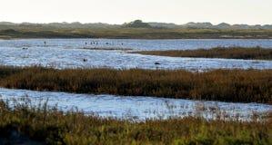 Wetland. Near the Ormond Beach california oxnard stock photography