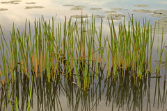 Wetland Stock Image