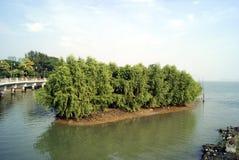 Wetland. Shenzhen mangrove , in shenzhen bay park, China Royalty Free Stock Photo