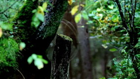 Wetland stock video