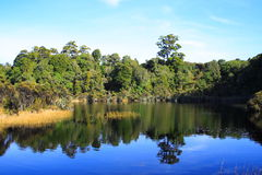 Wetland. In The New Zealand Stock Photography