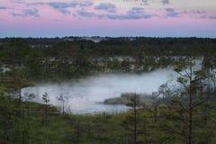 Wetland湖 免版税库存图片