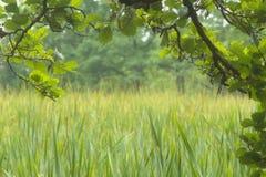wetland Fotos de Stock Royalty Free