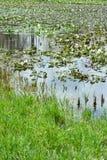 wetland Imagem de Stock
