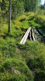 wetland fotografie stock libere da diritti