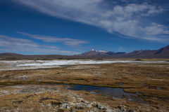 Wetland on the Altiplano Stock Image