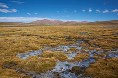 Wetland on the Altiplano Royalty Free Stock Photo