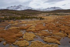 Wetland on the Altiplano Stock Photos