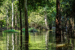 Wetland in Amazon, Brazil, South America Stock Images