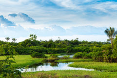 Wetland in Amazon, Brazil, South America Royalty Free Stock Images