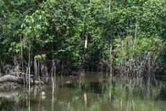 Wetland in Amazon, Brazil, South America Royalty Free Stock Photography