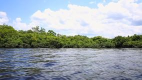 Wetland in Amazon, Brazil, South America stock video footage
