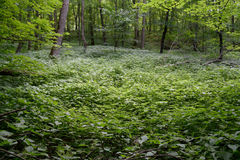 Wetland Area in Hardwood Forest Royalty Free Stock Photos