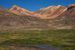 Wetland in the Atacama Royalty Free Stock Photography